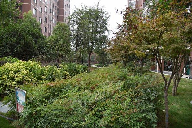 小区四季常青的灌木丛和乔木