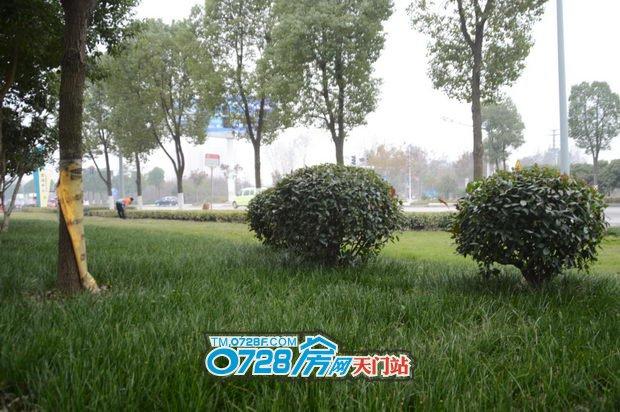 """爱上一座城,走进问天智汇东城,家门前有一片""""草原"""""""